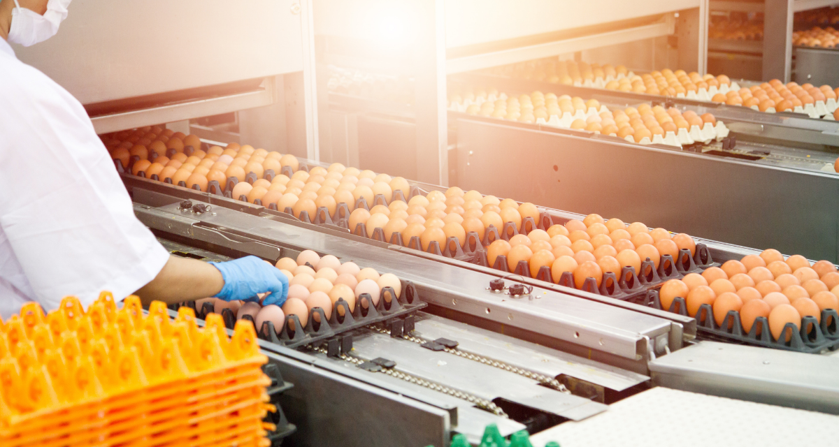 The Importance of Thermal Conductivity in the Food Production Industry
